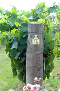 Vineyard end post